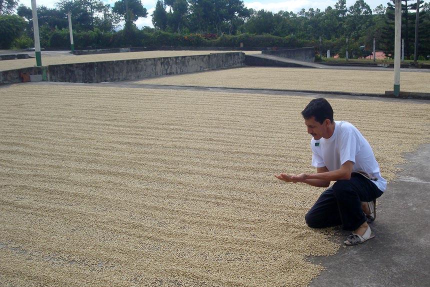 seccion-beneficio4-kafe-loma-verde