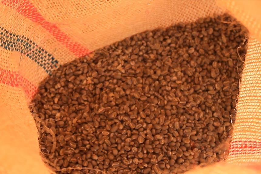 seccion-trillado2-kafe-loma-verde